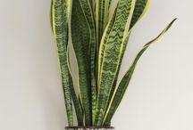 Plantas • Plants