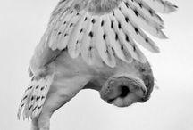 Nature is Wonderful * Owls / Ma petite collection de magnifiques photos de chouettes et hiboux
