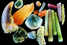 Micro / small, tiny, micro, perfect, design, nature, natural world, small scale, science, SEM images