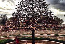 Tree's. Ancient spirits
