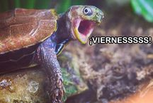 Viernes Only mems and pics / Pics for Screen - Spanish only, Fridays only