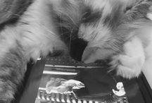 Lola Bunny / Kitten