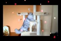 Romeo videos / The videos of my little daily adventures ...