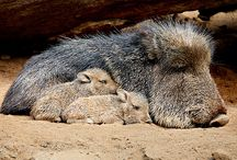 Fauna Animales