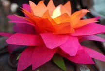 Lotus Seed unit