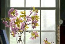 Windows Into Life