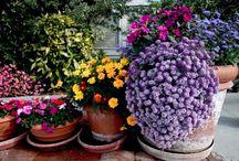 Flower Pots in the Garden  / by Faye Day