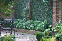 in my garden2b