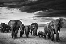 Yarrow DELIGHT / David Yarrow ~ Amazing pictures from wildlife ...