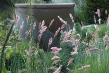 Gardening with grasses / by Andrew Rhomberg