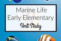 Marine Biology Workshops