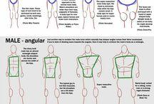 Référence dessin anatomie