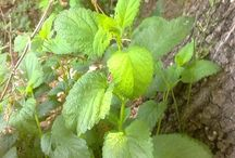 Healing plants / the amazing benefits of plants