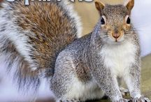 2015 Squirrels Calendar