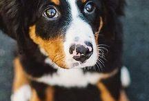 Dogggieeesss
