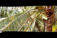 Genuine Coconut / #Aguadecoco verde, fresco, natural y saludable. Refrescante bebida isotónica, energética y ecológica. Coco entero de cultivo orgánico sin procesar de Tailandia