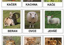 Didaktik - Zvířata