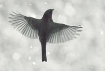 Flying / by Stephanie Holtz