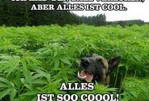 Witzig mit Hund