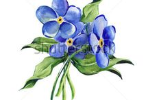 Forgetmenot Flower