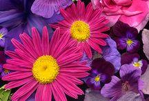 de belles fleurs et jardins