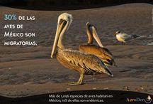 Fact Photos / Fotografía, datos, conservación, agricultura, México.
