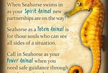 seahorse spirit guides