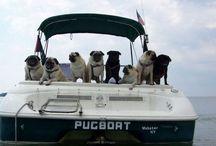 A love affair with Pugs & friends