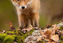 animals / by Leslie Sowash