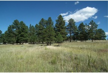 S PINE RIDGE Dr Elizabeth, CO 80107 / This beautiful treed lot sits right outside of city limits on 2.61 acres in Elizabeth, Colorado.  Close to Safeway, Big R, and Running Creek Elementary.