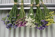 How to dry flowers