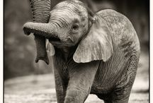 My elephant love  / by Shelby Evans