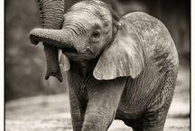 Hi, my name is Elephant and I'm the neatest animal ever.  / by Meg Burns