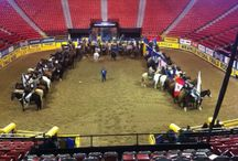 TeamRoper.com / TeamRoper.com exists solely for Team Ropers. Get great knowledge, sell/buy/trade your horses, find out about clinics and ropings in your area, and much more.  / by NRSworld