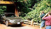 Redwoods Trip / by Delaney Bop