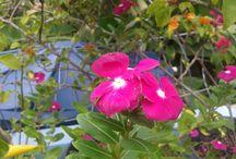Regue o seu Jardim! / Plante seu jardim e decore sua alma, ao invés de esperar que alguém lhe traga flores! (William Shakespeare)