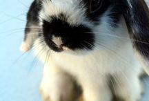Mini Loppie Bunnies