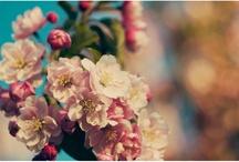 Flores + Plantas / by Camila Soares
