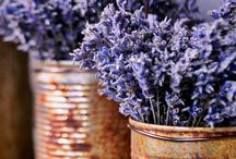 Lavender and herbs