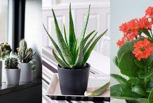 plantes et fleurs d intérieure