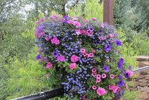 garden hanging baskets/boxes/containers