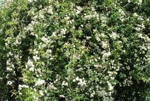 Fiori / Fleurs / Flowers