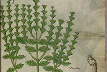 Rośliny zielniki