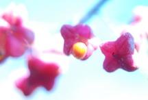 Ganz nah 11 | 2011 / Wir sind der Natur auf die Pelle gerückt und haben faszinierende Aufnahmen machen können. Kleine Details und leuchtende Farben wirken fast schon surreal im Zusammenspiel mit Schärfe und Unschärfe.