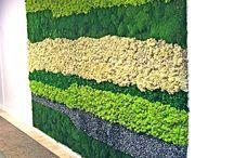 мох и стабилизированные растения