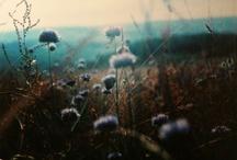 Pretty Things / by Sarah L