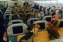 Burung Elang Naik Pesawat Terbang