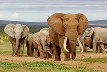 Afrika / Zie de authenticiteit van het prachtige Afrika met eigen ogen, met behulp van onze lokale reisagenten.