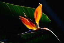 FLOWERS / by Sergio Alfaro