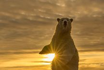 io orso gaia